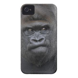 Flachlandgorilla, Gorilla gorilla, iPhone 4 Covers