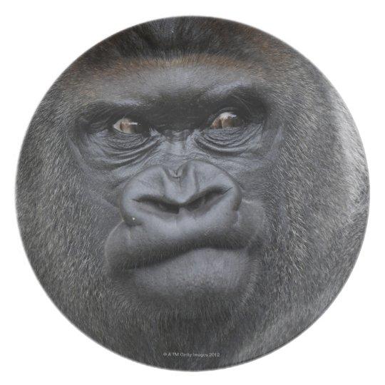 Flachlandgorilla, Gorilla gorilla, Dinner Plate