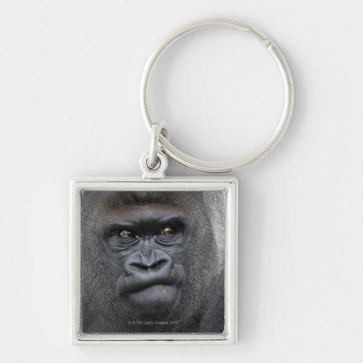 Flachlandgorilla, Gorilla gorilla, Key Chain