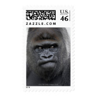 Flachlandgorilla, Gorilla gorilla, Stamps