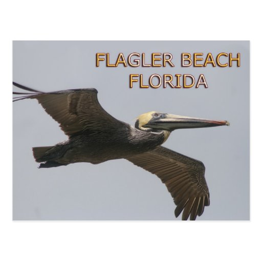 Flagler Beach Pelican Postcard