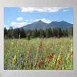 Flagstaff wildflowers print