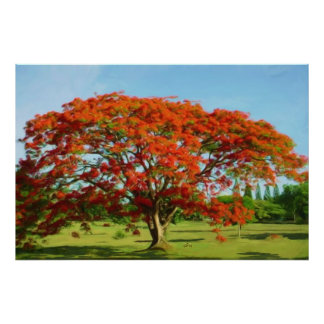 Flamboyan Rojo/poster real rojo de Poinciana Póster