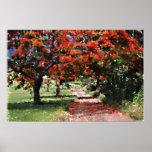 Flamboyan trees print