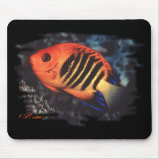 Flame Angelfish by H2Oasis Mouse Pad