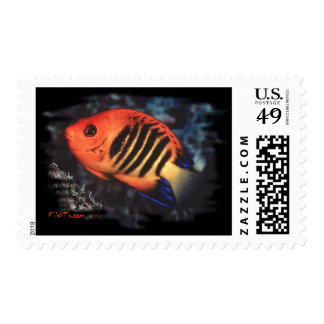 Flame Angelfish by H2Oasis Postage