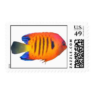 Flame Angelfish US Postage
