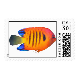 Flame Angelfish US Postage