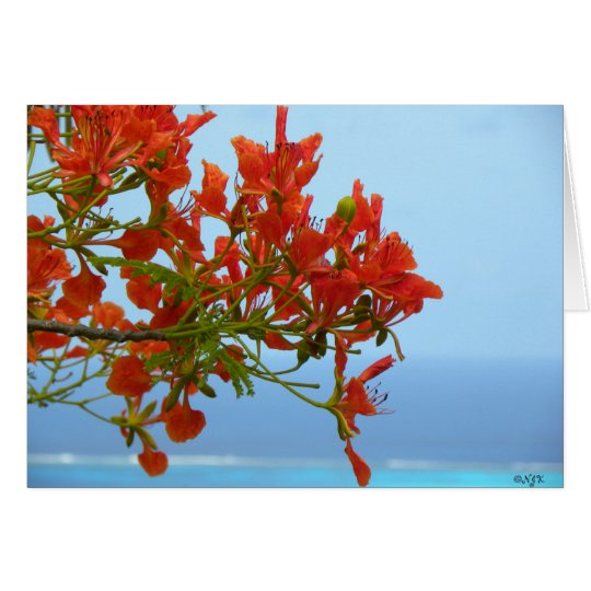 Flame Blossoms On An Ocean Of Blue Card
