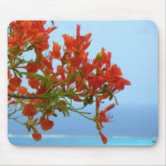 Flame Blossoms On An Ocean Of Blue Mouse Pad