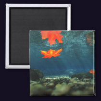 Flame in the Water Magnet
