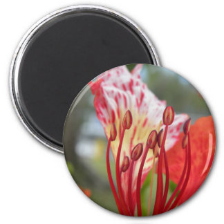 Flame Of Life 2 Inch Round Magnet