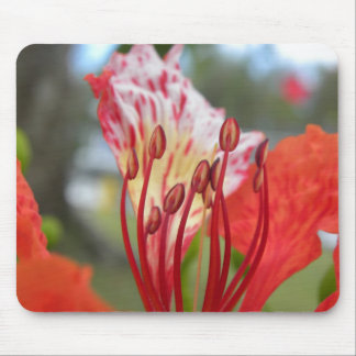 Flame Of Life Mouse Pad