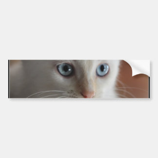 Flame Point Blue Eyes Bumper Sticker