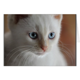 Flame Point Blue Eyes Greeting Card