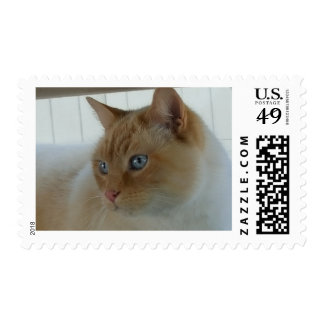 Flame-Point Siamese Cat Postage Stamp