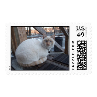 Flame Point Siamese Cat U.S. Postage Stamp