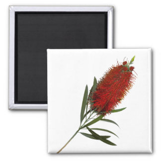 Flame Red Bottle Brush 2 Inch Square Magnet