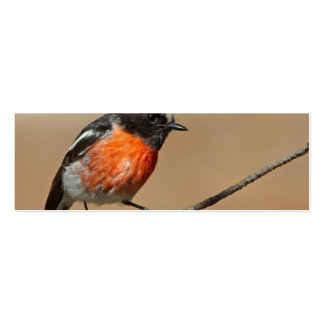 Flame Robin, Petroica Phoenicea Business Cards