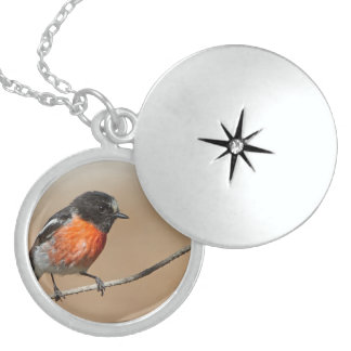 Flame Robin, Petroica Phoenicea Round Locket Necklace