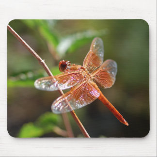 Flame Skimmer Dragonfly Mouse Pad