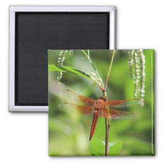 Flame Skimmer Photo Magnet