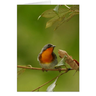 Flame-throated Warbler Card