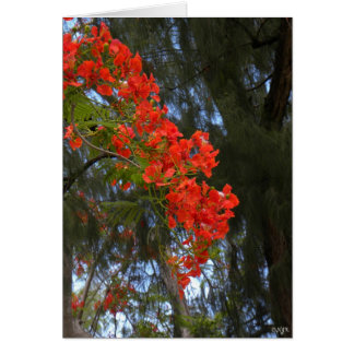 Flame Tree Cascade Card