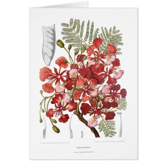 Flame Tree (Delonix regia) Card