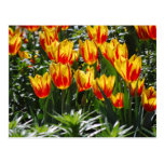 flame tulips post card