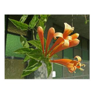 Flame vine 1 postcard