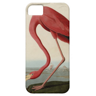 Flamenco americano iPhone 5 carcasas