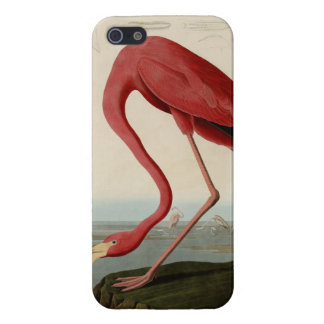 Flamenco americano iPhone 5 funda