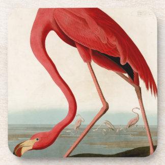 Flamenco americano por Audubon Posavasos