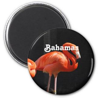 Flamenco bahamés imán redondo 5 cm