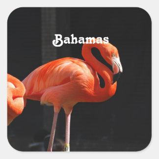 Flamenco bahamés colcomanias cuadradass