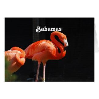 Flamenco bahamés felicitación