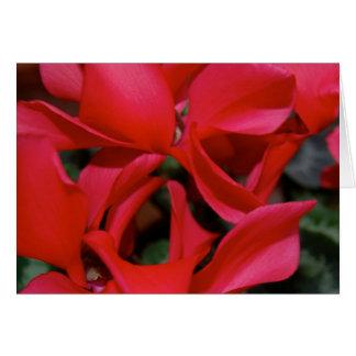 Flamenco Card