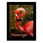"""Flamenco con el texto rosado del """"flamenco"""" postal"""