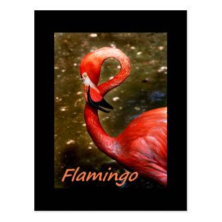 """Flamenco con el texto rosado del """"flamenco"""" postales"""