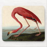 Flamenco del americano de Audubon Alfombrillas De Raton