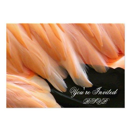 Flamenco Feathers_ Comunicados Personales
