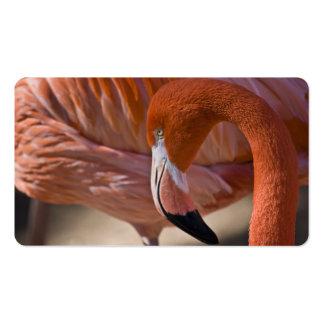Flamenco llameante tarjetas de visita