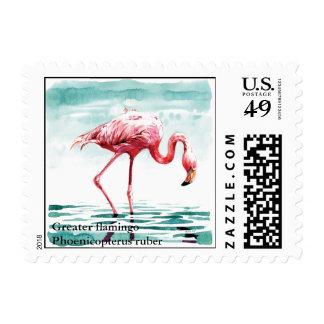 flamenco mayor, mayor flamingoPhoenicopteru… Sello Postal