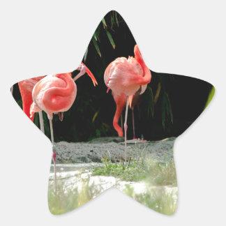 flamenco pegatina en forma de estrella