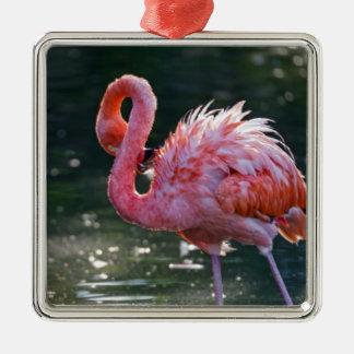 Flamenco rosado adorno