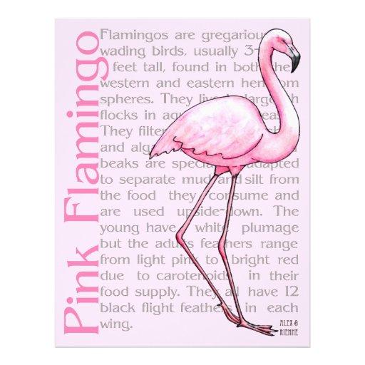 Flamenco rosado en el texto membrete a diseño