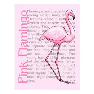 Flamenco rosado en el texto postal