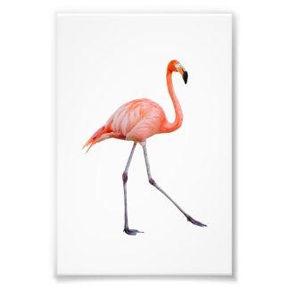 Flamenco rosado fotografías