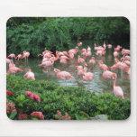 Flamenco rosado Mousepad Tapete De Raton